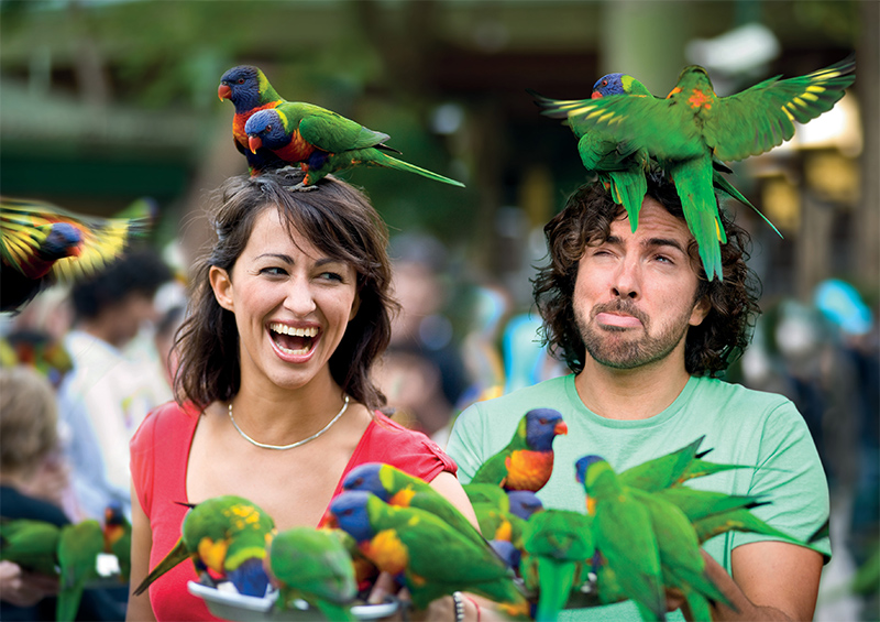 Currumbin Sanctuary Lorikeets credit Tourism and Events Queensland