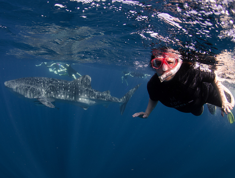 Swim with Whales Sharks in Western Australia