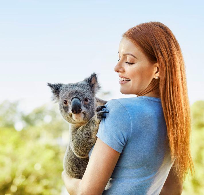 Hug a Koala in Brisbane